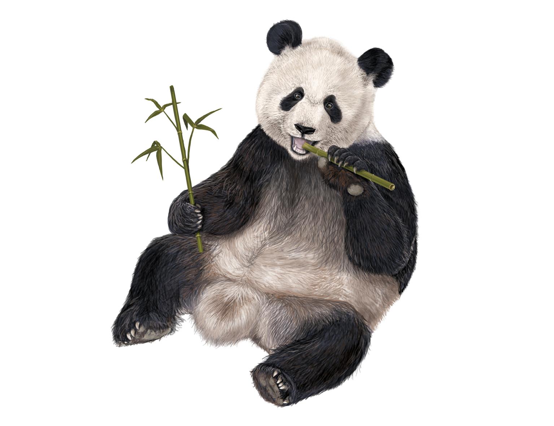 giant panda vulnerable essay writer