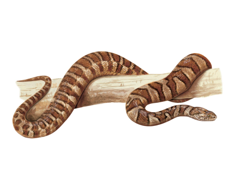 Рептилии змеи